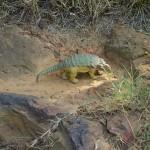 На территории кампуса НАСА обнаружены следы динозавров