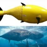 BIOSwimmer: изобретён плавающий робот с дизайном тунца