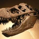 Украденные скелеты динозавров возвратят в Монголию