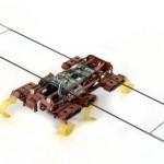 Мини-робот копирует всем знакомых тараканов