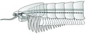 Реконструкция древнейшего членистоногого показывает первые примитивные жвалы на Земле.