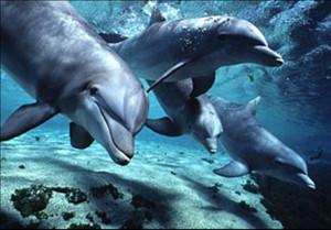 Дельфины в общении используют имена