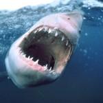 В США зарегистрировано рекордное  количество нападений акул с начала века