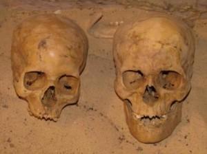 Череп слева принадлежит по отдельным характеристикам к почти средиземноморской (белой) расе, а череп справа - явно от крепкого негроидного человека из нубийского племени (ок. 1750 до н.э.)