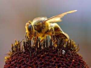 Инсектициды приносят больше вреда, чем пользы