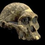 Исследователи нашли новые причины появления человека