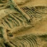 Ученые обнаружили в Якутии самые древние останки скелетных животных