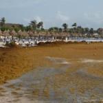 Военно-морской флот Мексики борется с наплывом водорослей на пляжах