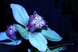 1337946920_orhideya