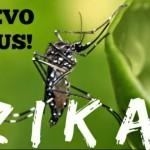 В Швеции и Дании зарегистрированы первые случаи заражения вирусом Зика
