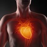 «Ботокс» для сердца был создан учёными в Новосибирске