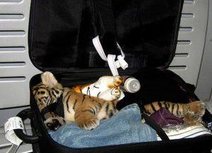 В период с 2010 по 2014 год, более чем 64,000 живых диких животных было конфисковано при попытке незаконной перевозки