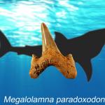 Изучение редких окаменелостей зубов привело к открытию вымершего вида гигантских акул