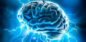 Личность связана с различиями в структуре мозга