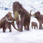 Через пару лет мамонты будут свободно бродить по Земле?