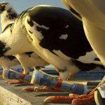 «Может срежем по прямой?» Самонаводящиеся голуби