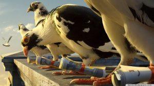 """""""Может срежем по прямой?"""" Самонаводящиеся голуби"""