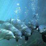 Язык дельфинов будет переведен при помощи искусственного интеллекта к 2021 году