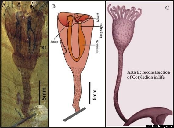 Обнаружены древнейшие предки современных внутрипорошицевых