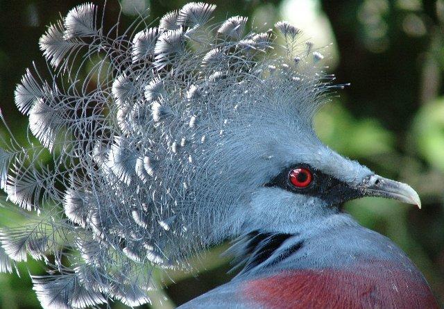 Зрение птиц в процессе развития видов менялось