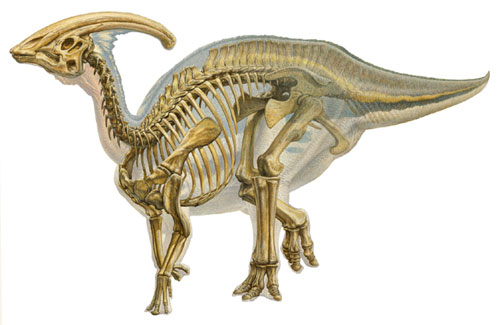 В Мексике найден полный хвост гадрозавра