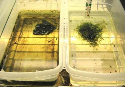 Ученые изучили воздействие инсектицидов на амфибий