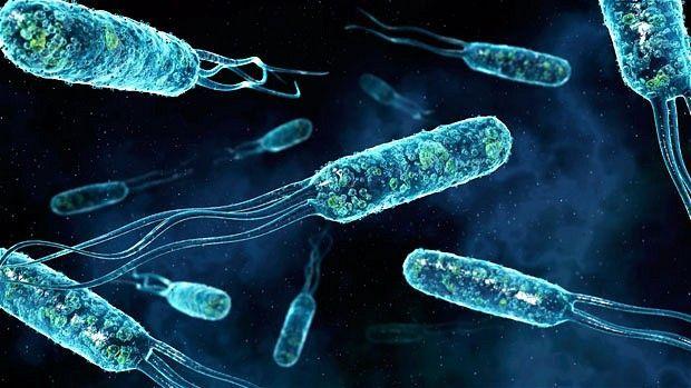 Сверхтекучесть воды помогут достичь бактерии Escherichia coli