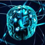 Исключительным человеческий мозг делает количество нейронов