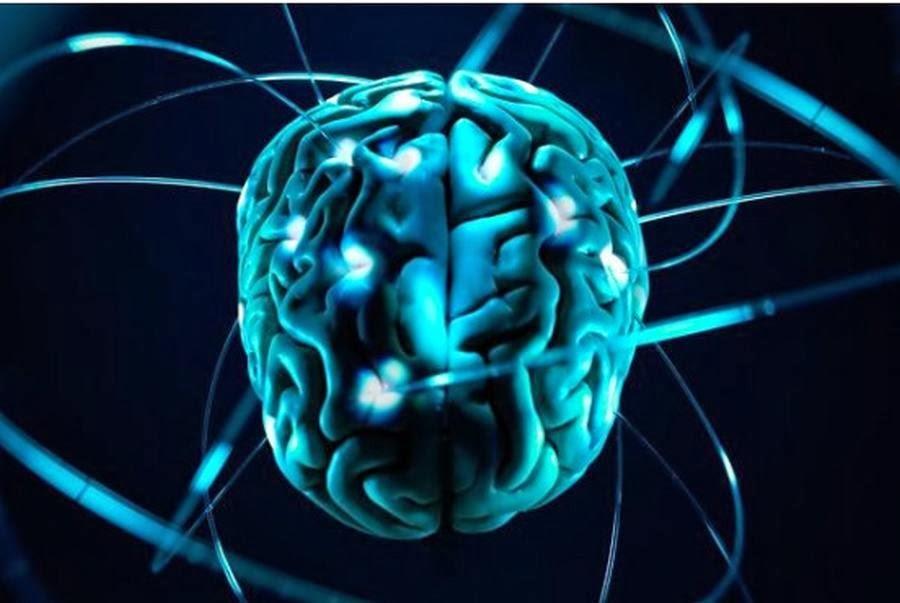 Человеческий мозг обладает большим количеством нейронов
