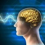 Ученые выяснили, что человеческий мозг способен регулировать вес тела