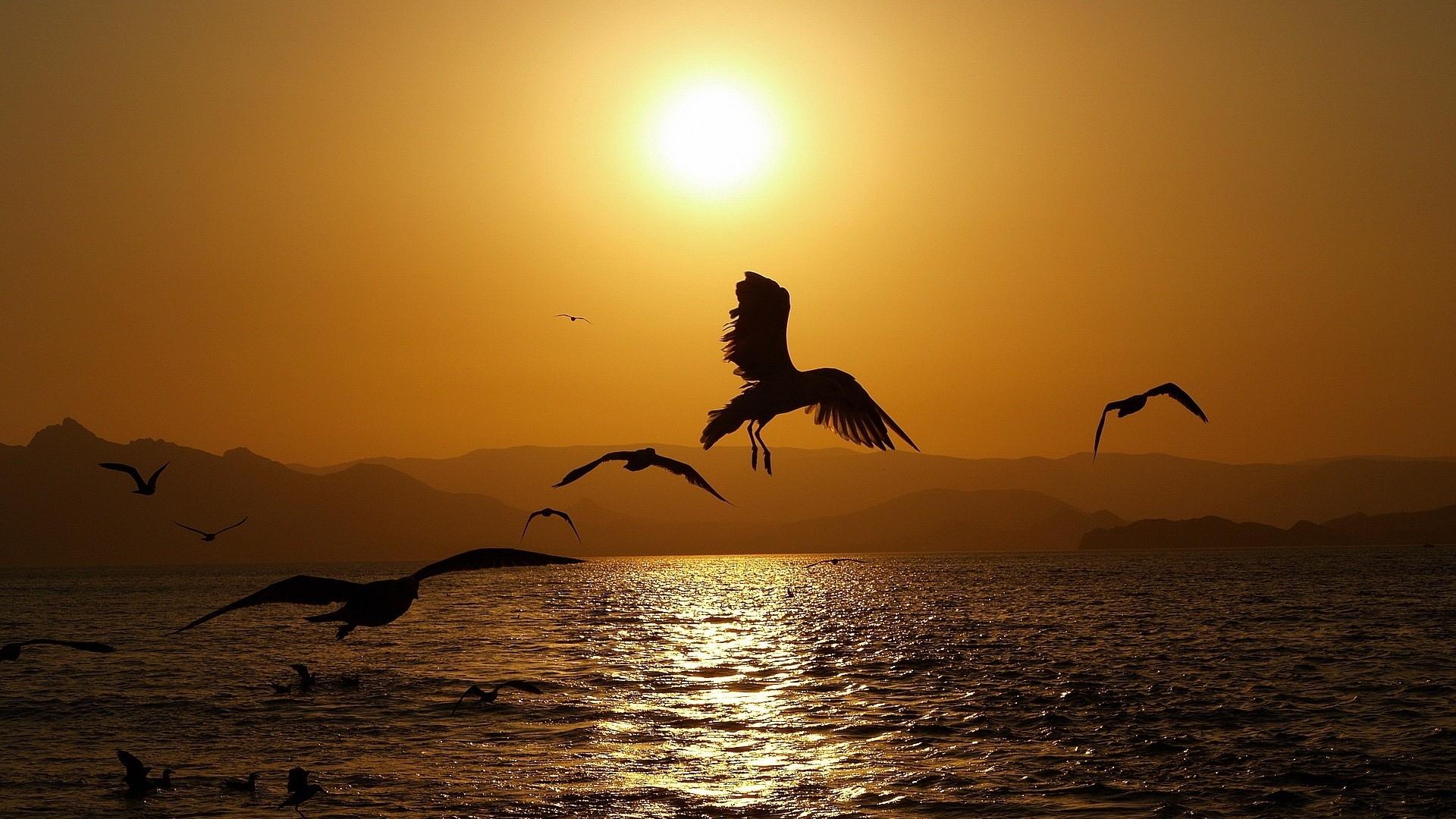 многие виды птиц, такие как фрегат, живут почти без сна