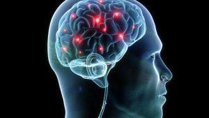Люди должны отказаться от идеи о том, что человеческий мозг исключителен