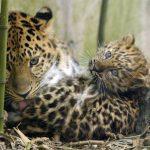 Две трети позвоночного животного мира может исчезнуть к 2020 году