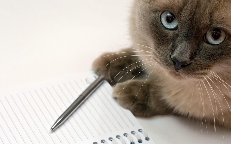 Профессора физики заставили взять в соавторы сиамского кота