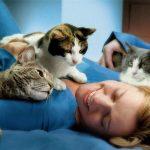 Кошкам на самом деле приятно проводить время со своими владельцами