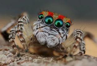 Пауки съедают столько насекомых, сколько весит все человечество