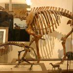 Ученые используют митохондриальную ДНК для разгадки тайны древнего существа.